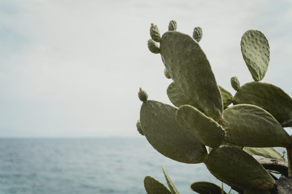 La Conca sul Mare